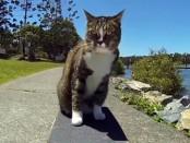 cat-skate-bild