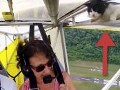 cat-plane-cover