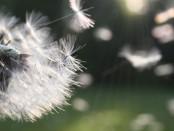 Pollenallergie-HP_photo