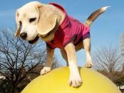 dog_on_a_ball