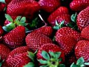 erdbeeren-hp