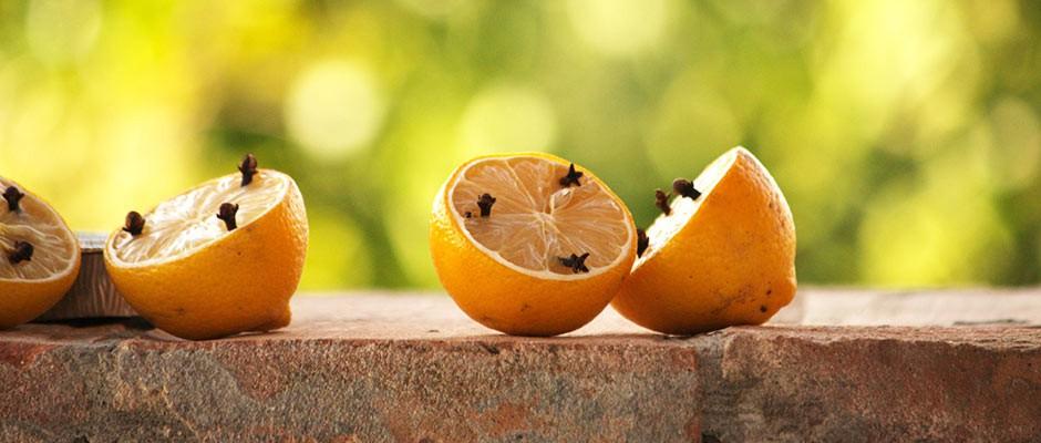 lemons-hp